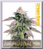 Female Dream Berry Feminized 4 Marijuana Seeds